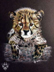 Cheetah Cub by BlvqWulph