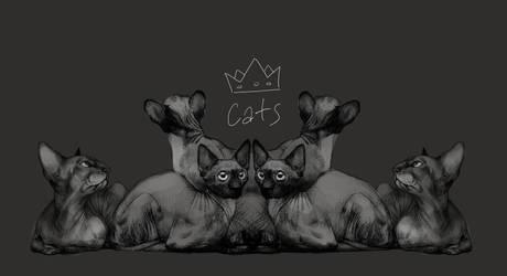 cats by CatsGoPurr