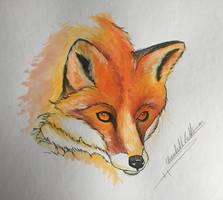 Fox by ElizabethHolmes