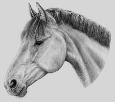Horse by LauriieT
