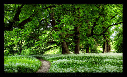 The Fairy Path by Starkall