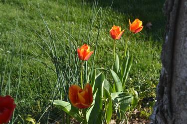 Flowers6 by ButtercupRocks99