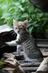 Cats II by Pulau1