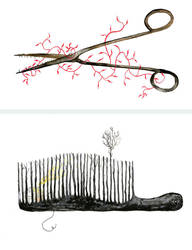 little scissors- comb by raquelissima