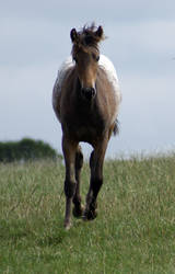 Foal Stock 04 by candigal