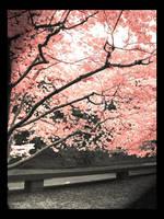 Sakura by MellowCandle
