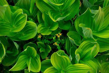 Fleur de Vert by ColinHSillerud