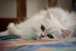 Kitty II by jpgmn