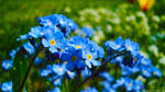 Blu bouquet by bogdanpopa
