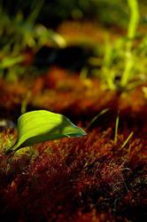 Leaf by CloudNineStock