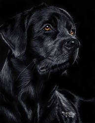 Black Dog by marmicminipark