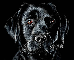 Black Lab 2 by marmicminipark