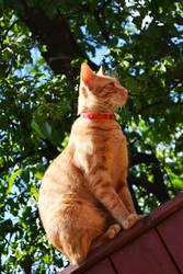 Ginger cat by Denisa66