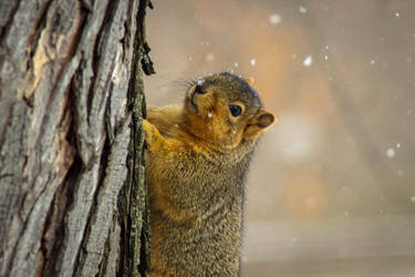 Squirrel in the Snow (1 of 1) by alucard214
