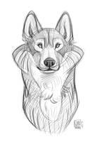Wolf Sketch (1) by CarolineRaquel