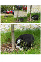 Cats fall from trees in Poland by nenneko
