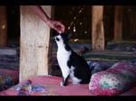 Cats of Egypt no.1 by nenneko