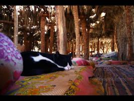 Cats of Egypt no.3 by nenneko