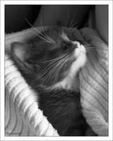 Bus kitten no.1 by nenneko