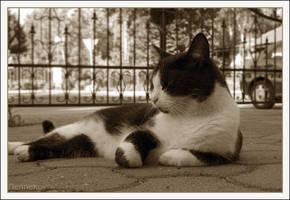 My Neighbour's EVIL cat by nenneko