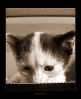 Hello little one :: by nenneko