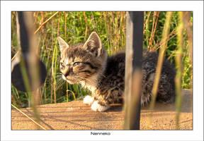 Wet Kitten 1 by nenneko