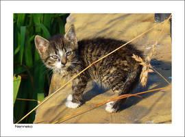 Wet Kitten 2 by nenneko
