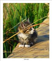 Wet Kitten 3 by nenneko