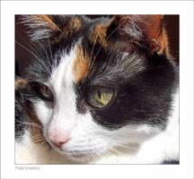 Portrait of My Cutie by nenneko