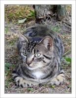:Eagle's cat no.1: by nenneko