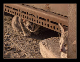 Cat Family no.7 by nenneko