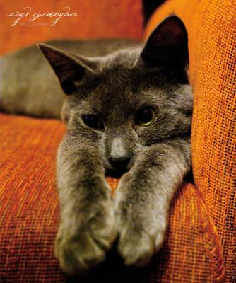 Kitty Sense is Tingling by lagattapiccola