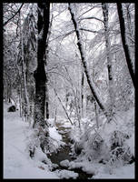 Winter by tendence