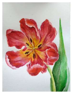 Tulip 4 by vivist