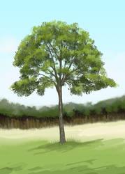 Ashtree by chaypeta