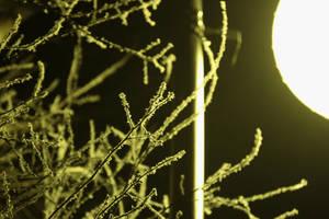 Trees in a Light by Kalabint