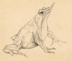 Rhinoderma rufum by uialwen
