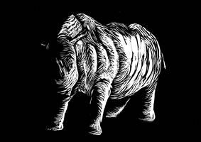 Rhino by olibrine