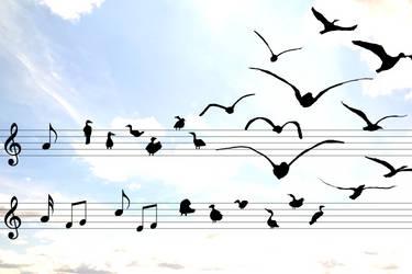 Songbirds by olibrine