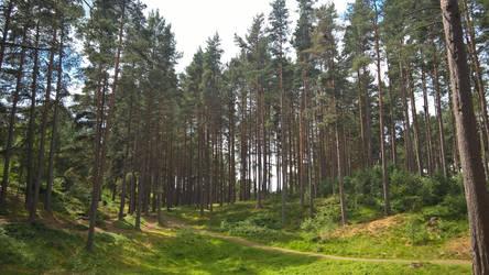 Hidden Pathway by olibrine