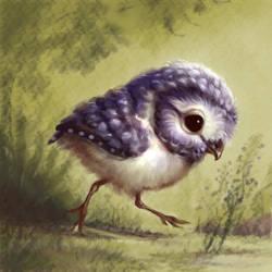 Little Owl Walking by ArtofOkan