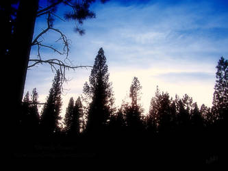Forest Sillhouette by RavenMoonDesigns