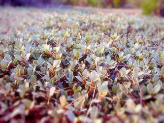 Ground Cover by RavenMoonDesigns