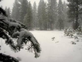 Snowy Field by RavenMoonDesigns