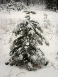 Snowy Tree by RavenMoonDesigns
