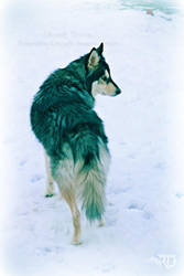 In the Snow - Atticus by RavenMoonDesigns