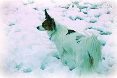 In the Snow - Merlyn by RavenMoonDesigns