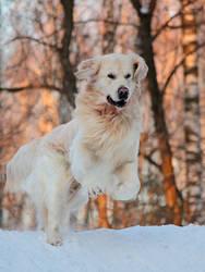 Happy Run by DeingeL-Dog-Stock