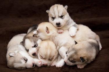 Sweet Dreams by DeingeL-Dog-Stock