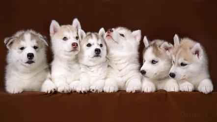 Six kids by DeingeL-Dog-Stock